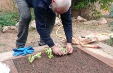 Plantamos las primeras lechugas